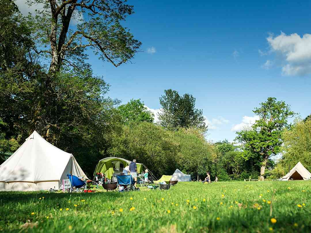 Three Hares Campsite: Camping field surrounded by trees