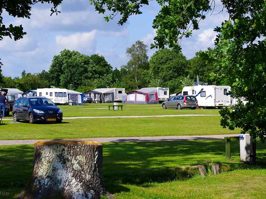 Shamba Holidays: Level grass pitches