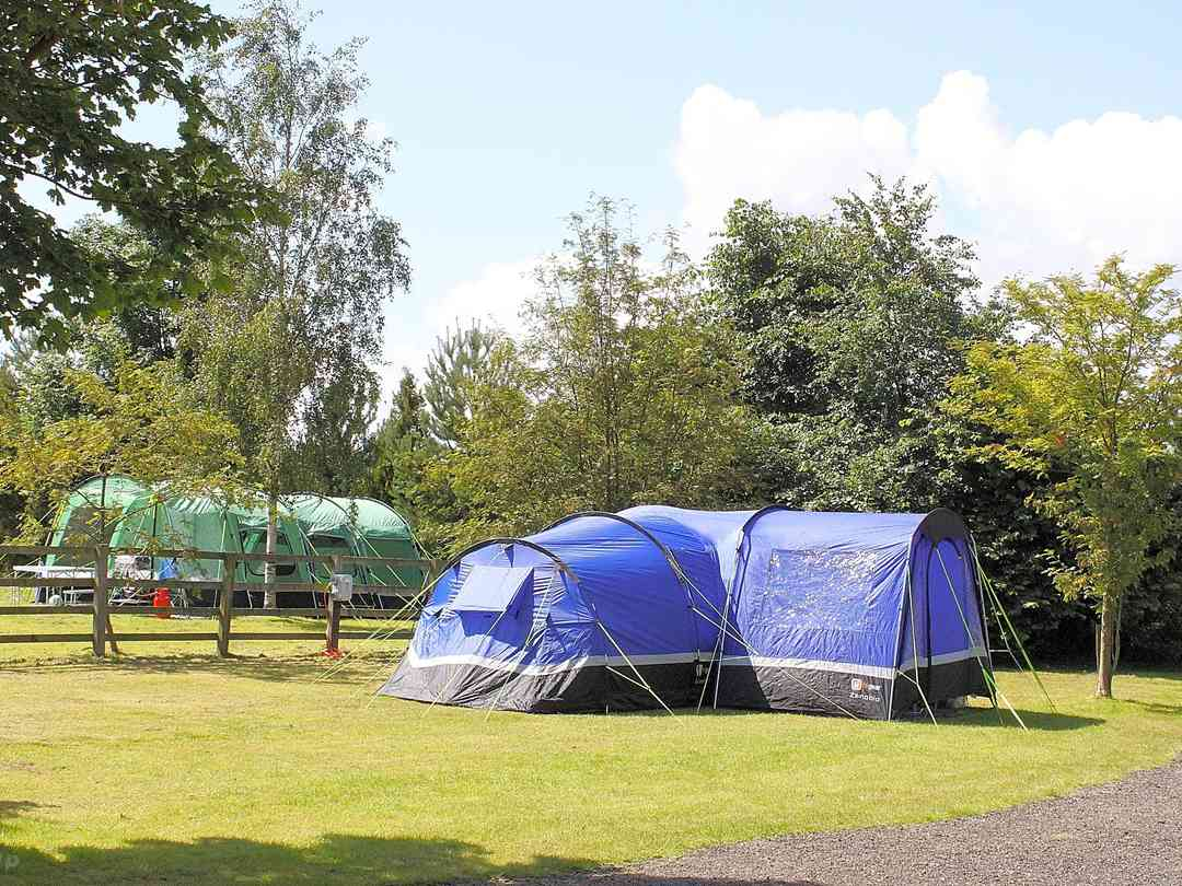 Jasmine Park: Spacious tent pitches