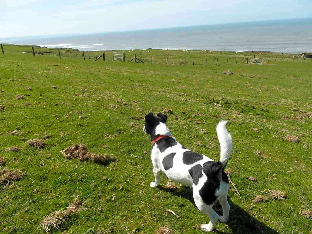 Morfa Bychan Holiday Park: Plenty of wide open spaces to walk furry friends