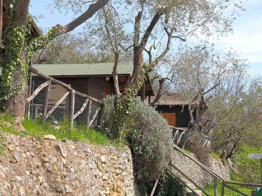 Chalets among the olive trees