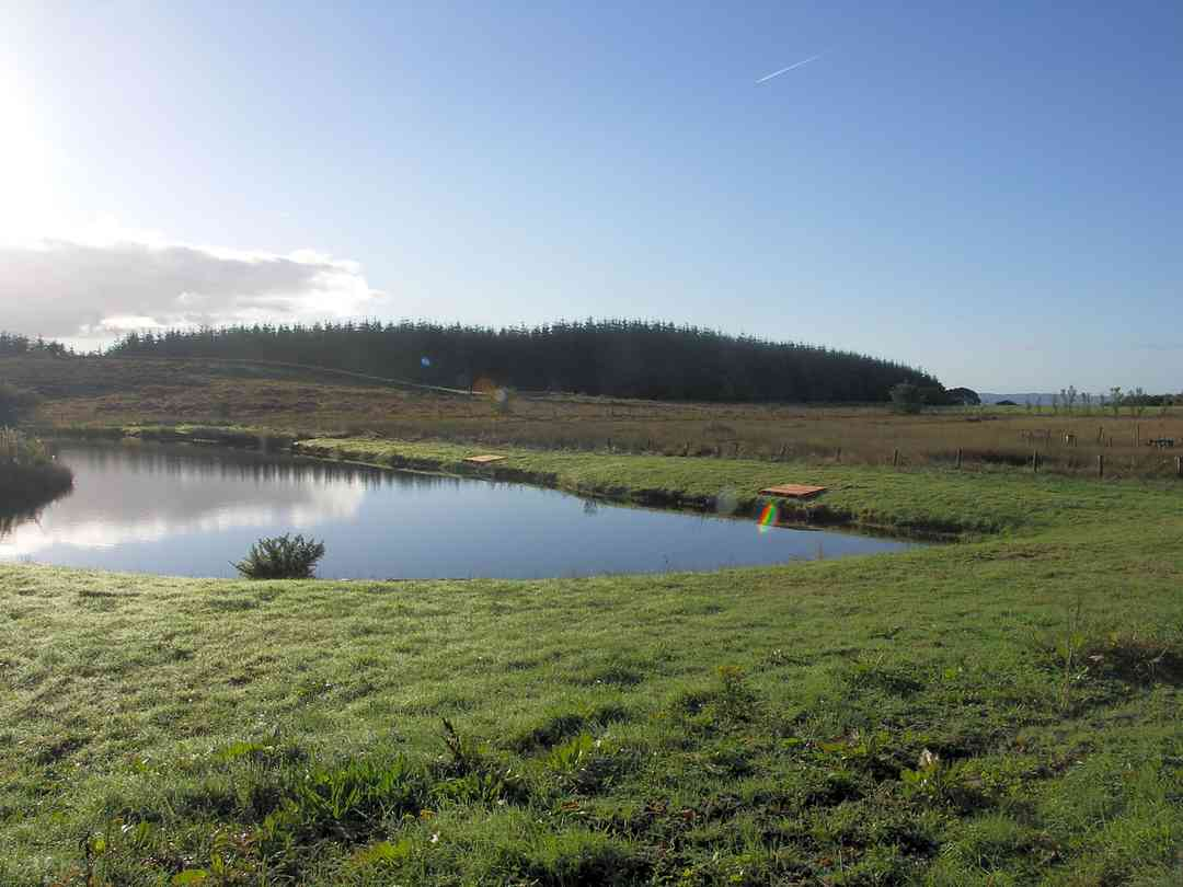 Pentwyn Pods and Fishery