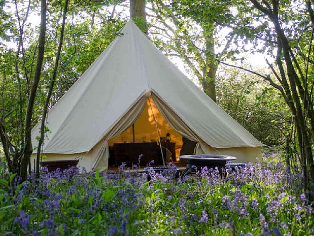 Oak Tree Farm Glamping: Bell tent in bluebell wood
