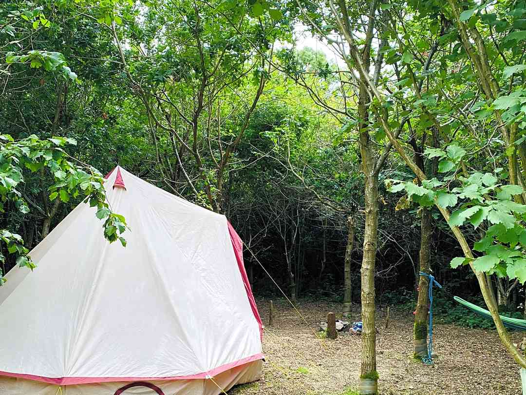 Fire and Stars Woodland Camping: Spacious and secluded pitches - whatever the size of your tent