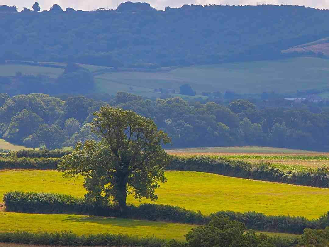 Haddon Copse Farm: View from the site to the Dorset downs