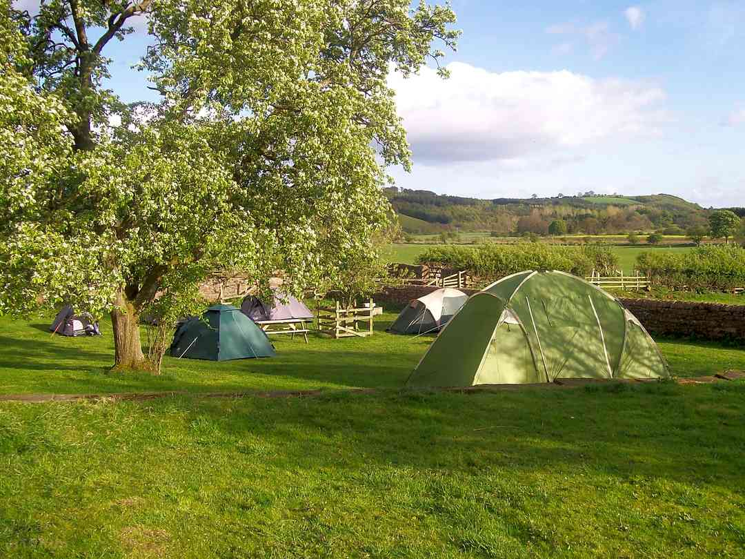 Grass tent pitches in the apple orchard