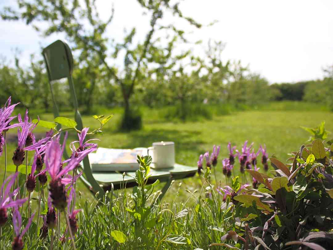 Fen End Farm: Relax in the orchard with a coffee and a good book