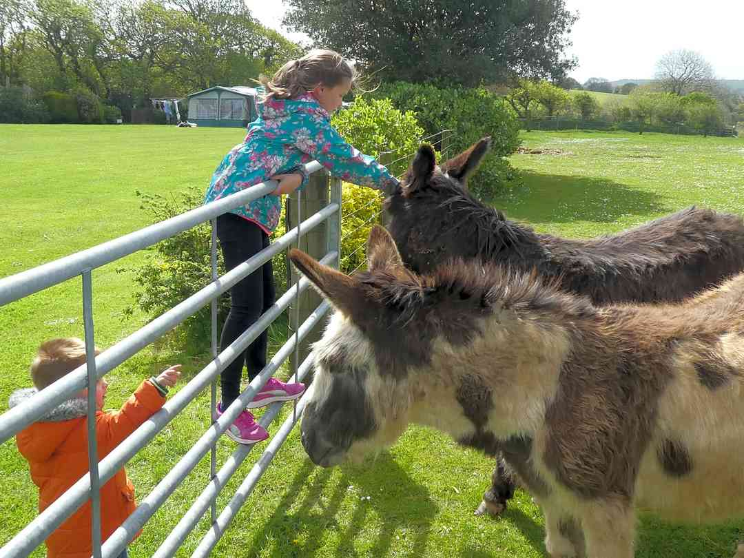 Donkeys on site, which kids are welcome to feed