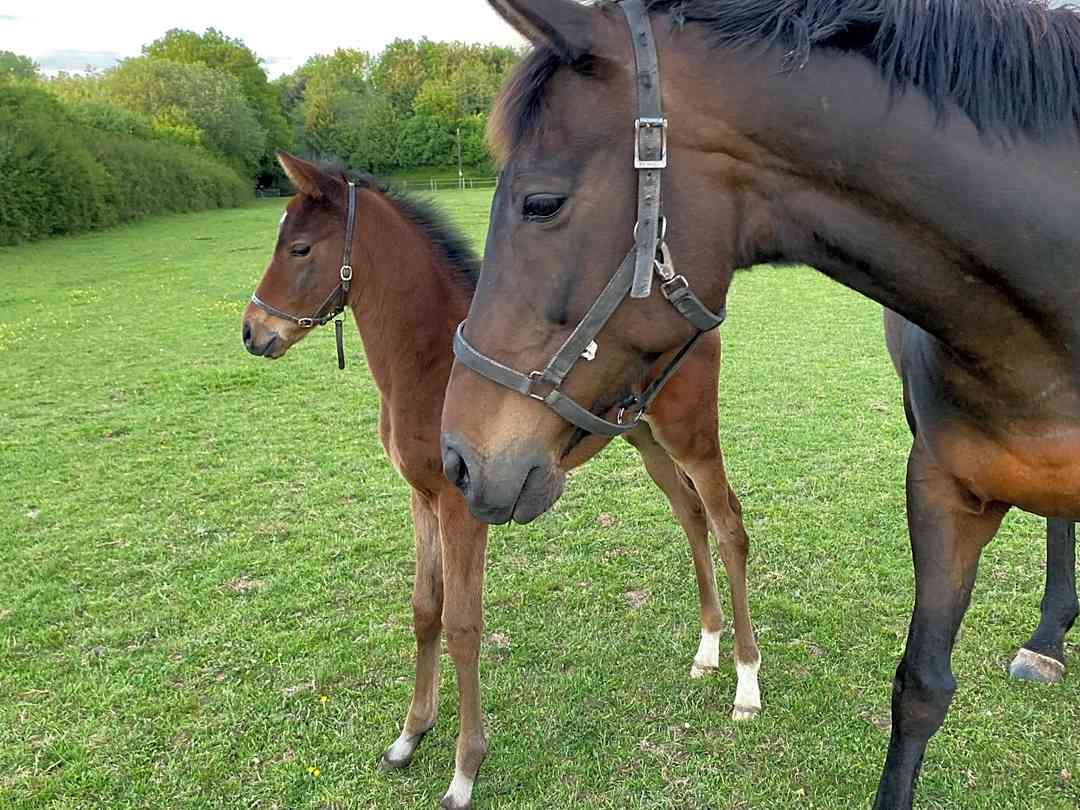 Acorn Yurt: How cute are the foals?