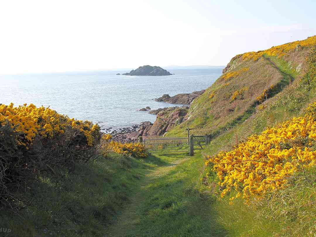 Mill Haven Place: The walk down to Mill Haven Beach and the Pembrokeshire Coast Path