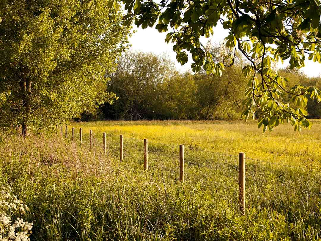 Dorset Glamping Fields: Open meadows lined with trees