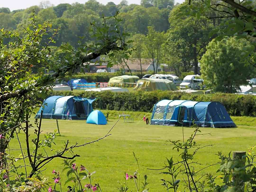 Dolbryn Caravan and Camping