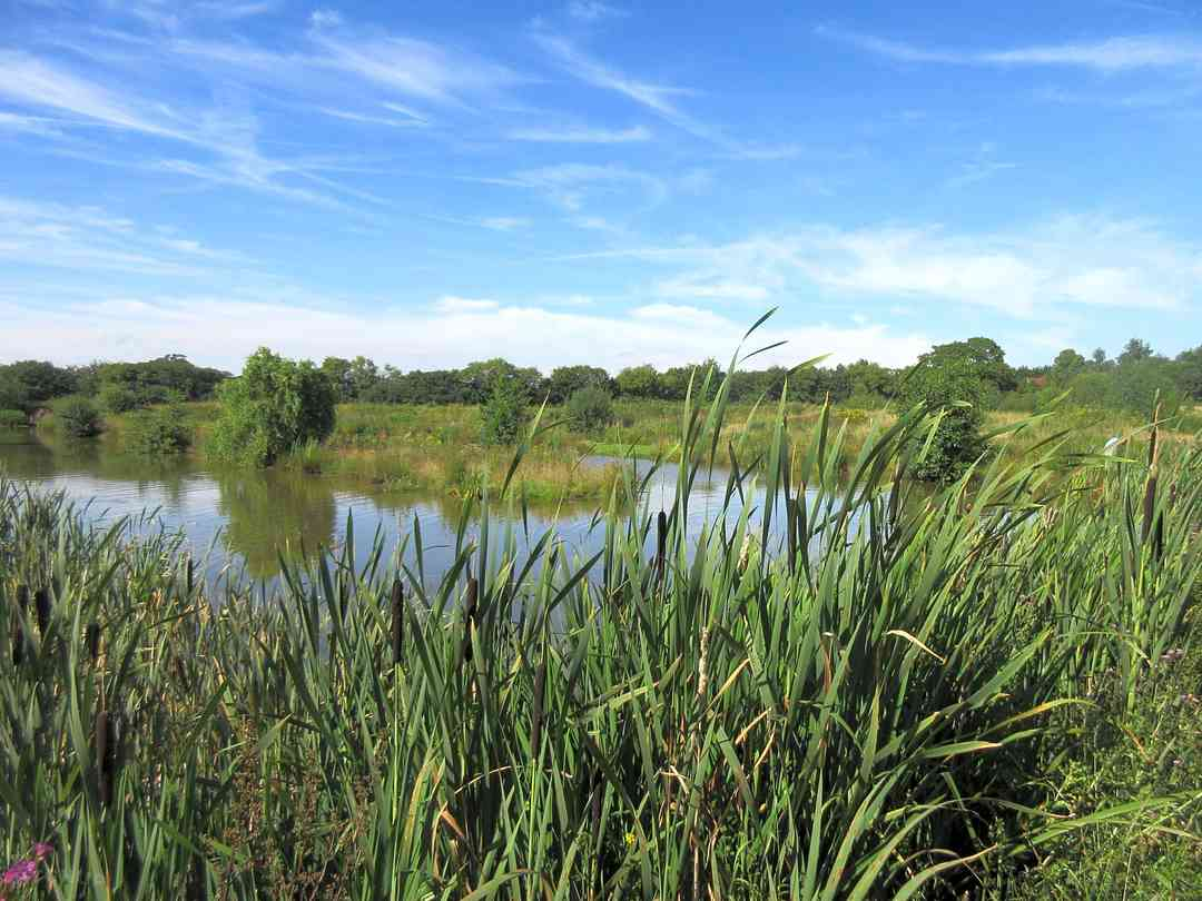 Big Foot Glamping and Camping At Tarvin Sands Fishery