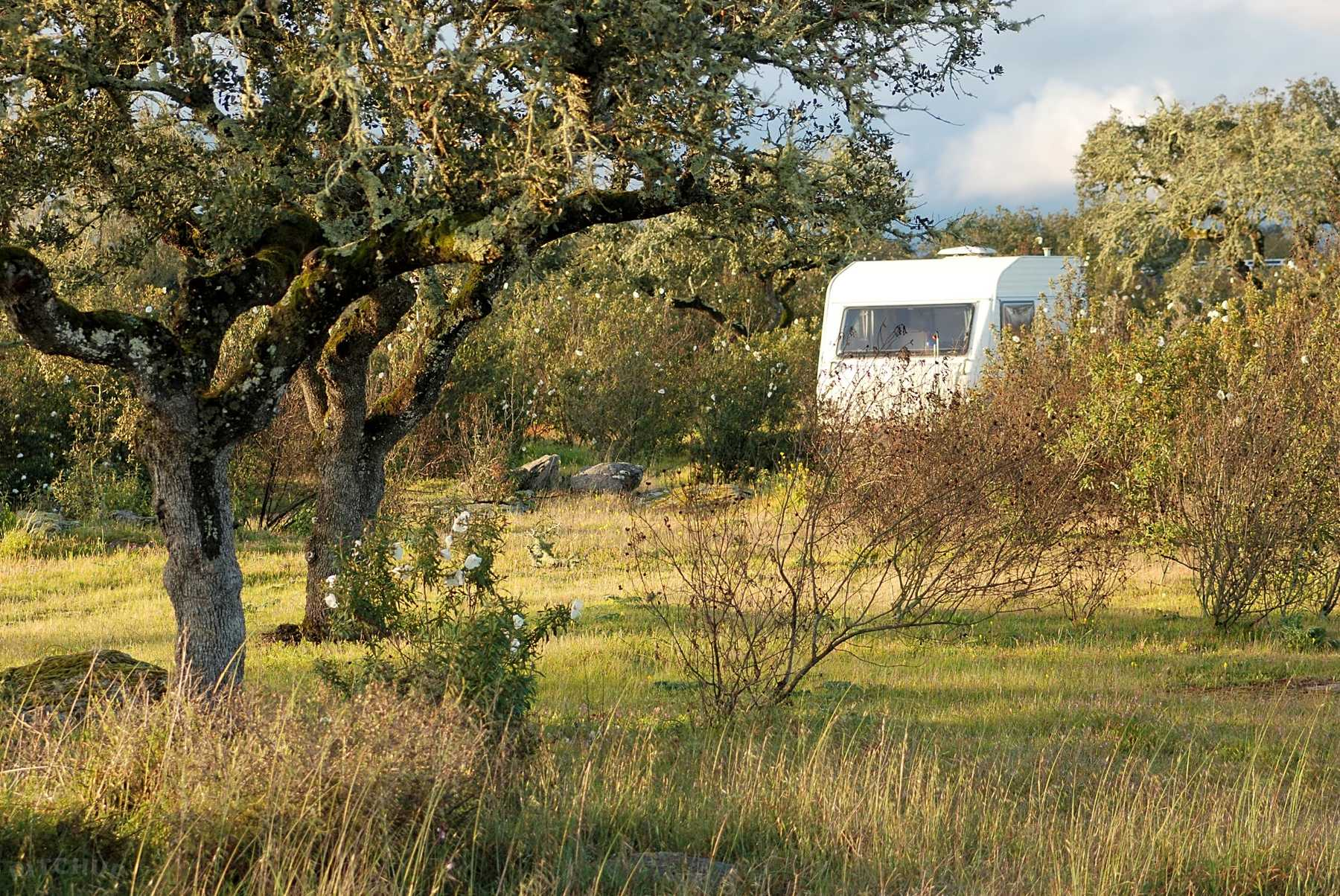 CAMPGROUND – Bubulcus & Bolotas Camping