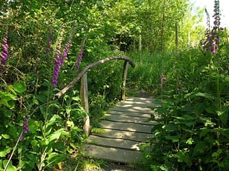 Foxgloves on the yurt path