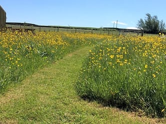The paths leading from the tents among the wild flower meadow in spring/early summer