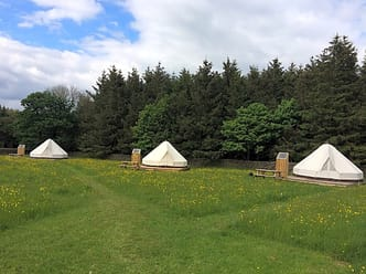 Our glamping field in spring/early summer