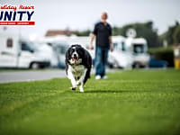 Grass serviced pitches, dogs welcome