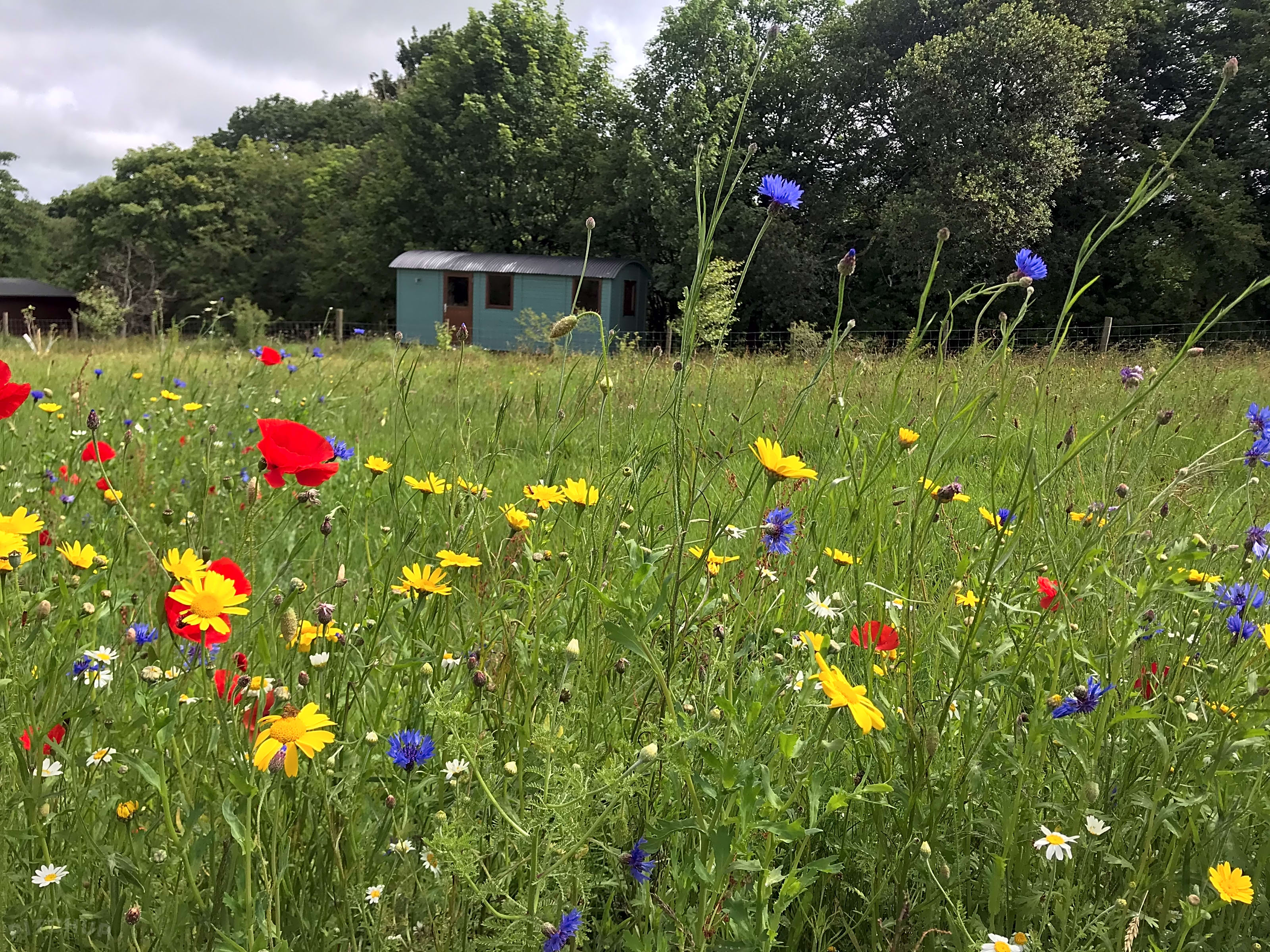 Wild Meadow Camping, Plwmp - Updated 2021 prices - Pitchup®