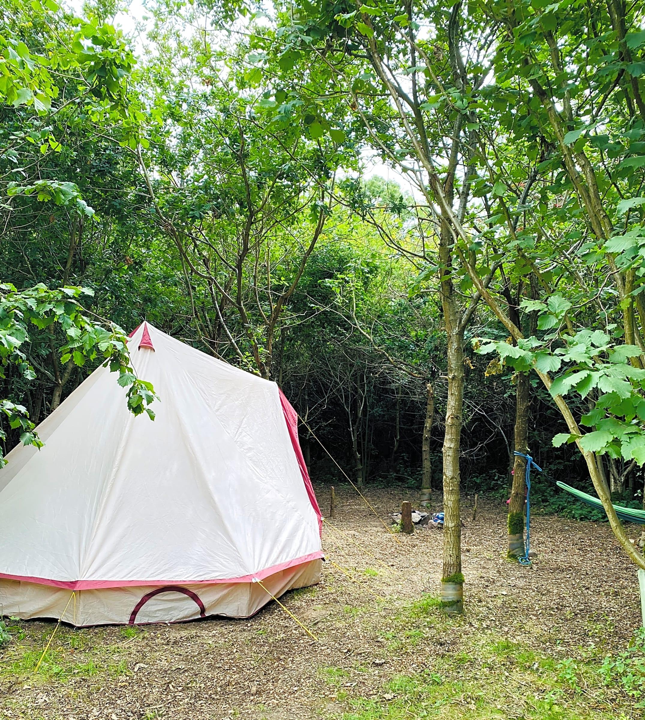 Fire and Stars Woodland Camping, Newton Burgoland ...