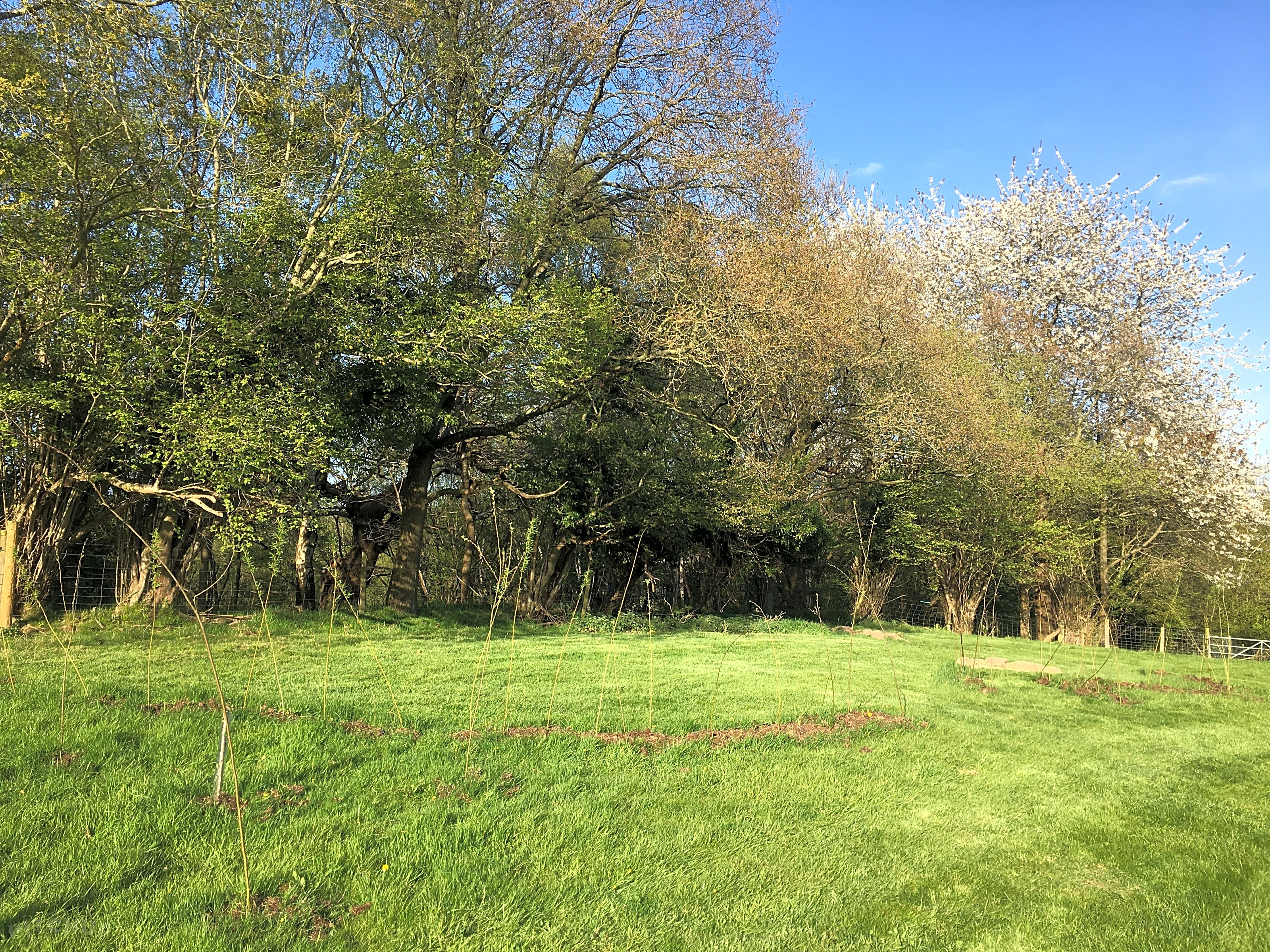 Wild Cherry Camping, Chirk - Updated 2020 prices - Pitchup®