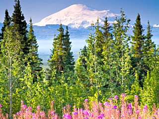 Beautiful views of Mt. Drum with fireweed in the foreground