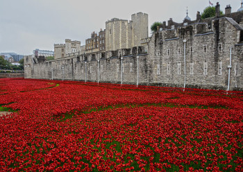Commemorative World War I poppies at the Tower of London, 2014. Pic by Yuval weitzen.
