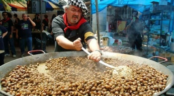 Stirring snails in Lleida
