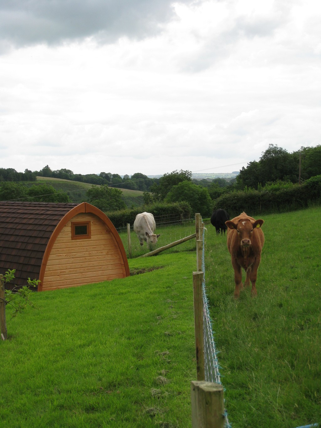 Pod - and residents - at Einon Valley Camping Pods