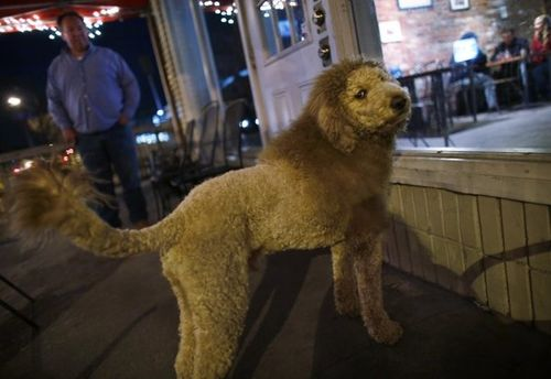 Lion dog. 'How YOU doin'?'