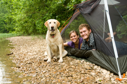 'Where's my pup tent?'